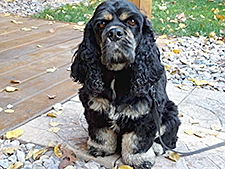 Wrigley, a seven-year-old Cocker Spaniel shares his adventure while traveling with his owners around the country in their diesel motorhome.