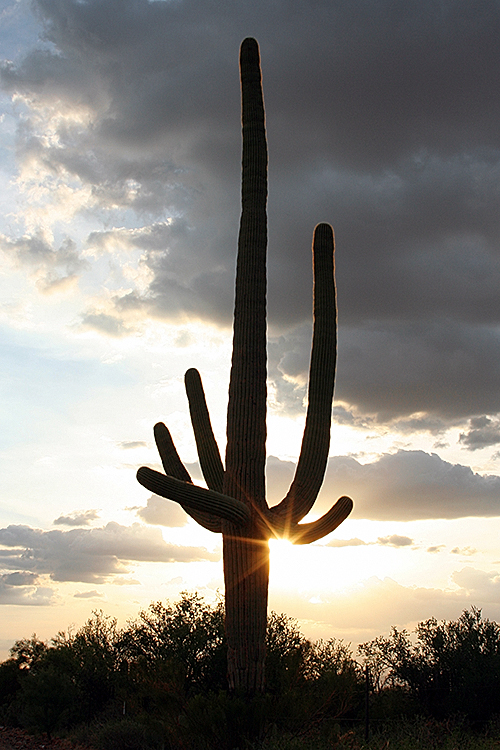 Be sure to visit the Lazydays Tucson Resort while wondering through the Sonoran Desert.