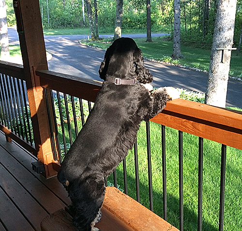 Wrigley stands on the porch of his home awaiting the retrun of the